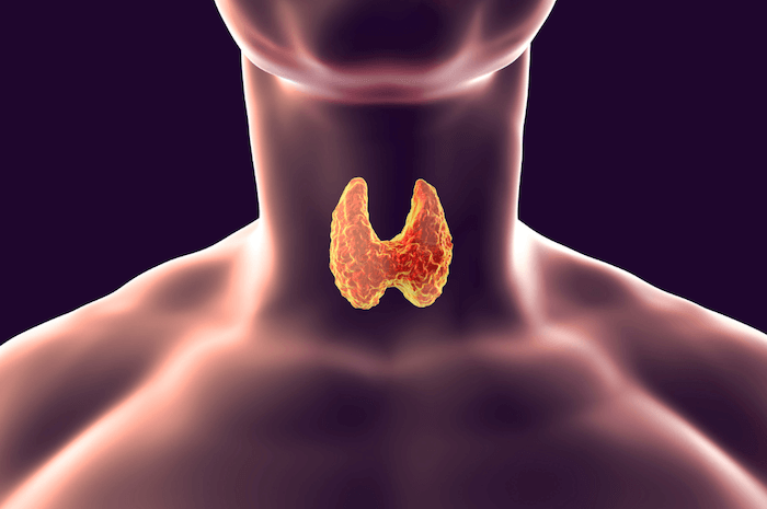 digital image of person with xray red and yellow thyroid